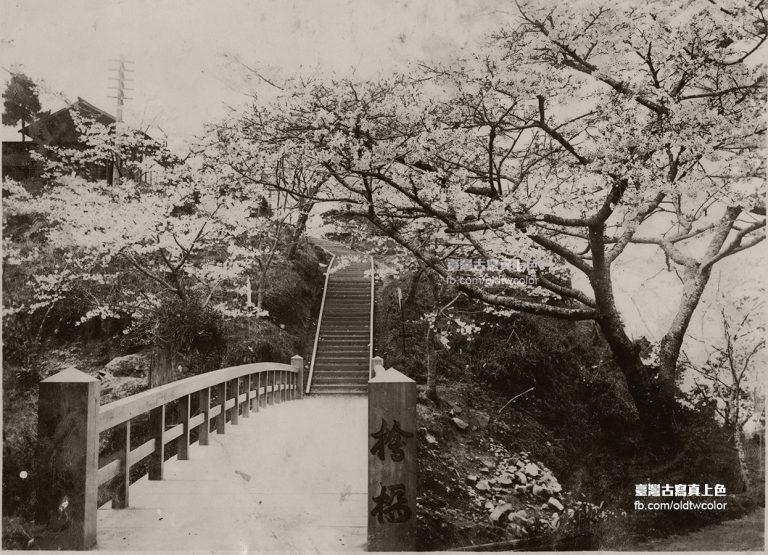 日治時代阿里山櫻花